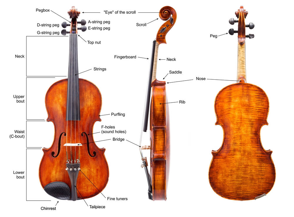 violin anatomy graphic with labels